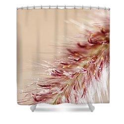 Fountain Grass Blooms   Shower Curtain