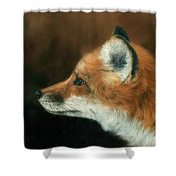 Fox Shower Curtain by David Stribbling