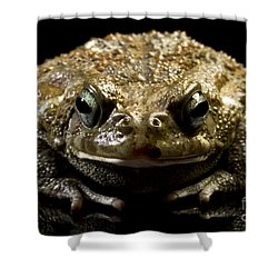 Frog Shower Curtain by Gunnar Orn Arnason