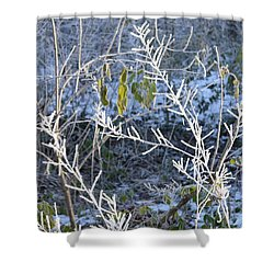 Shower Curtain featuring the photograph Frozen by Felicia Tica