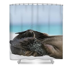 Galapagos Sea Lion Pup Covering Face Shower Curtain