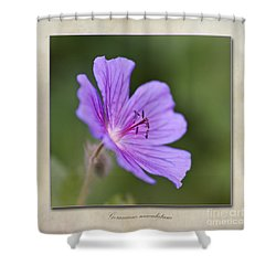 Geranium Maculatum Shower Curtain by John Edwards