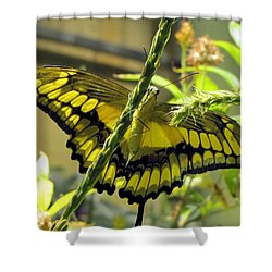 Giant Swallowtail Shower Curtain by Jennifer Wheatley Wolf