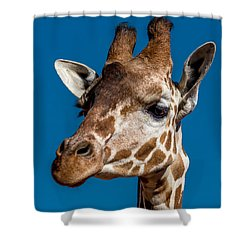 Giraffe Shower Curtain by Ernie Echols