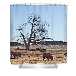 Give Me A Home Where The Buffalo Roam Shower Curtain by James BO  Insogna