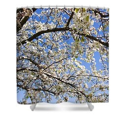 Glimpse Of Spring Shower Curtain by Heidi Smith