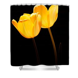 Glowing Tulips II Shower Curtain