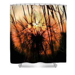 Going To Seed Shower Curtain by Steven Reed