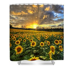 Golden Evening Shower Curtain by Debra and Dave Vanderlaan