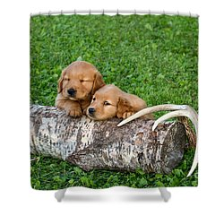 Golden Retriever Puppies Shower Curtain by Linda Freshwaters Arndt