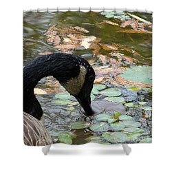 Goose Shower Curtain by Jane Ford