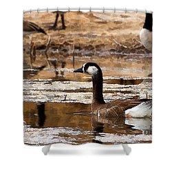 Goose Pond Shower Curtain