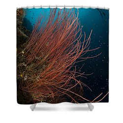 Grand Sea Whip With Diver Shower Curtain by Steve Jones