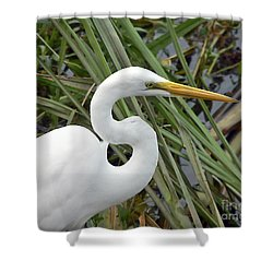 Great Egret Close Up Shower Curtain