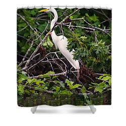 Great White Egret Shower Curtain by Chris Flees