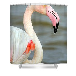 Greater Flamingo Phoenicopterus Roseus Shower Curtain by Panoramic Images