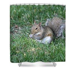 Grey Squirrel Shower Curtain by Lori Tordsen