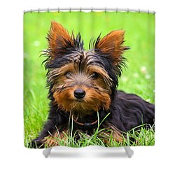 Hello Toby Shower Curtain by Angela Doelling AD DESIGN Photo and PhotoArt