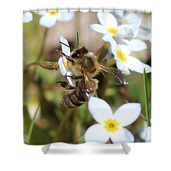 Honeybee On Bluet Shower Curtain by Lucinda VanVleck