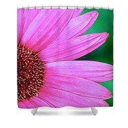 Pink Gerbera Flower Shower Curtain