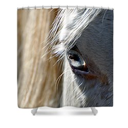 Horse Eye Shower Curtain by Savannah Gibbs