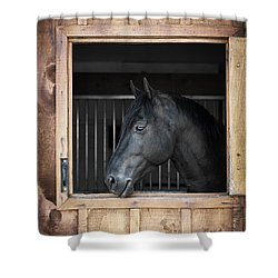 Horse In Stable Shower Curtain by Elena Elisseeva