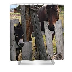 Shower Curtain featuring the photograph Horsing Around by Athena Mckinzie