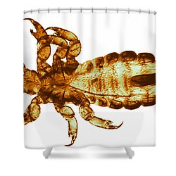 Human Louse, Lm Shower Curtain by Eric V. Grave