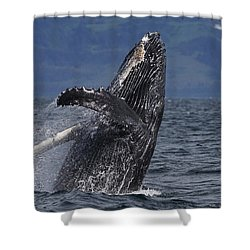 Humpback Whale Breaching Prince William Shower Curtain by Hiroya Minakuchi