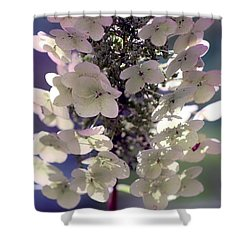 Shower Curtain featuring the photograph Hydrangea  by Debra Forand