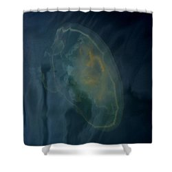 Jellyfish 1 Shower Curtain