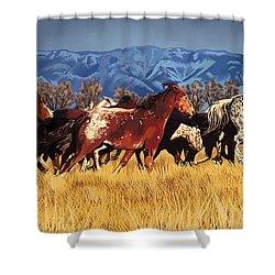 Joe's Horses Shower Curtain by Tim Gilliland