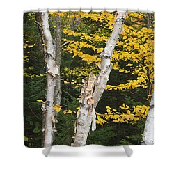 Kancamagus Highway - White Mountains New Hampshire Shower Curtain