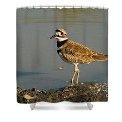 Killdeer Shower Curtain