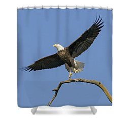 King Of The Sky 3 Shower Curtain by David Lester