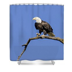 King Of The Sky Shower Curtain by David Lester