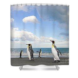 King Penguins Gold Harbour  Shower Curtain by Yva Momatiuk John Eastcott