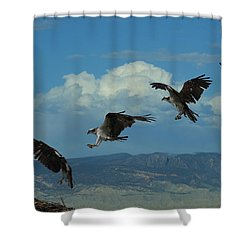 Landing Pattern Of The Osprey Shower Curtain