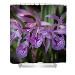 Lilac Orchid Cluster Shower Curtain