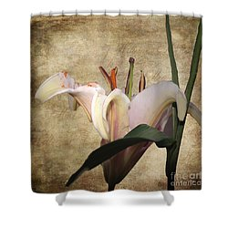 1 Lily 1 Beauty Shower Curtain