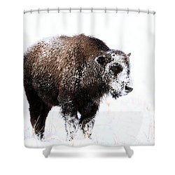 Lone Calf Shower Curtain