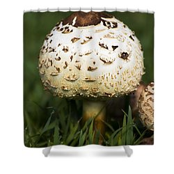 Magic Mushroom Shower Curtain by Jorgo Photography - Wall Art Gallery