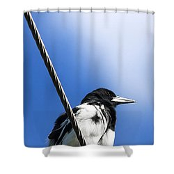Magpie Up High Shower Curtain by Jorgo Photography - Wall Art Gallery