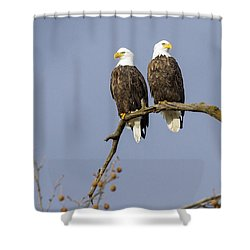 Majestic Beauty 5 Shower Curtain by David Lester