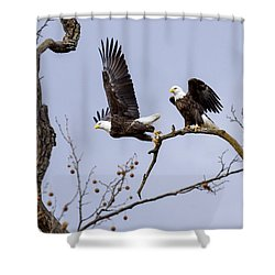 Majestic Beauty  Shower Curtain by David Lester