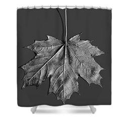 Maple Leaf Shower Curtain by Steven Ralser