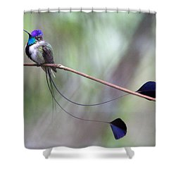 Marvelous Spatuletail Shower Curtain by Max Waugh