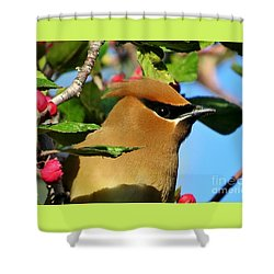 Masked Bandit Shower Curtain by Michele Penner