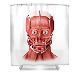 Medical Illustration Of Male Facial Shower Curtain by Stocktrek Images