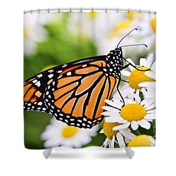 Monarch Butterfly Shower Curtain by Elena Elisseeva